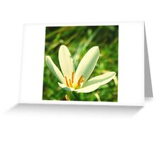 Lily Flower Reaching High Greeting Card