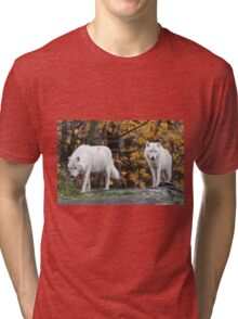 Pair of Arctic Wolves in fall Tri-blend T-Shirt