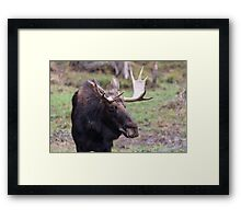 Large moose in a forest Framed Print