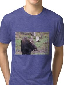 Large moose in a forest Tri-blend T-Shirt