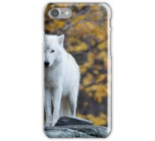 Arctic Wolf - Parc Omega, Quebec iPhone Case/Skin