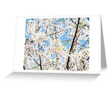 LP - Blossoms Greeting Card