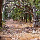 Sacred Canyon Creek, Wilpena, South Australia. by johnrf