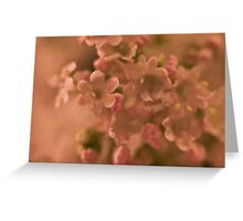 Valarian Blossoms Macro - Digital Oil Painting Greeting Card