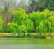 Weeping Willows by Penny Smith