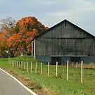 Venango County Farm In Fall by Geno Rugh