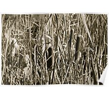 Autumn Cattails Poster