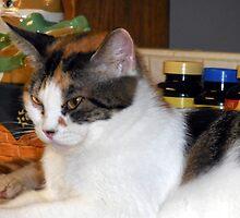 A Lovely Cat by Chris Gudger