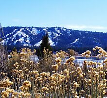 PRETTY WINTER BROWN PLANTS IN FRONT OF SNOWY BIG BEAR LAKE by CHERIE COKELEY