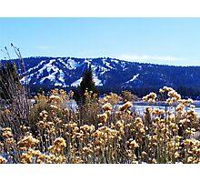 WINTERY PLANTS AND SNOW AT BIG BEAR LAKE Photographic Print