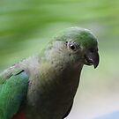 Australian King-Parrot, Female by aussiebushstick