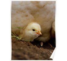 Peek-A-Boo - Happy Easter - Chick NZ Poster
