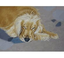 Sleeping Pet Photographic Print