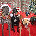 Christmas Joy by HoundExposure