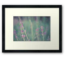 Lavender landscape Framed Print
