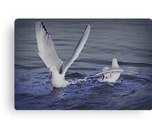 seagull on lake Canvas Print