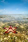 Horned Sea Star by Dieter Tracey