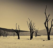 Dead Vlei with dead trees in desert landscape of Namib BW 02 by travel4pictures