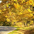 The Autumn Road by Marilyn Cornwell