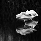 Swan Cloud by Lisa Cook