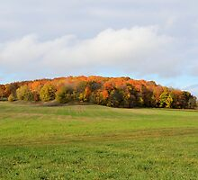 Mound of Fall Color by Kathleen Brant