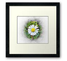 Fading Daisy Framed Print