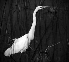 Secret Egret by Lisa Cook