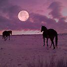 Sunrise Moon Walk  by Judy Grant