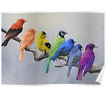Birds of all Colors Poster