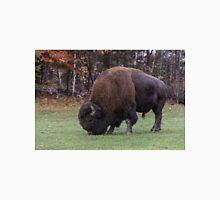 American Field Buffalo grazing Unisex T-Shirt