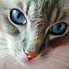 Ol' Blue Eyes by Carol Bleasdale