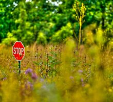 Stop? by Roger Passman