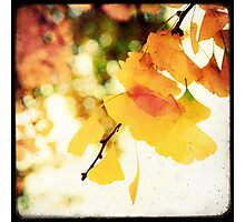 Colorful Ginkgo Photographic Print