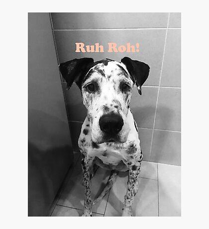 Ruh Roh! - Great Dane Photographic Print