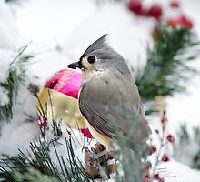 Christmas Titmouse by Christina Rollo