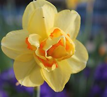 Some Kind of Daffodil by ryanmsorel