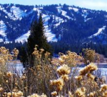 WINTERY PLANTS AND SNOW AT BIG BEAR LAKE Sticker