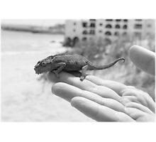 Beach Chameleon Photographic Print