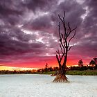 Dam! What a Sunset - Logan Qld Australia by Beth  Wode
