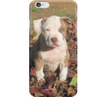 """Spice"" In The Fall Leaves iPhone Case/Skin"