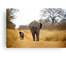 African Elephant (Loxodonta africana) mother and baby Canvas Print