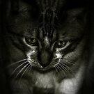 """"""" Fat Cat"""" by iamelmana"""