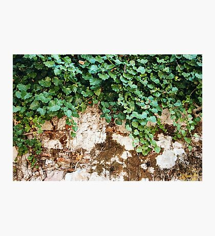 Nature Background with Ivy Leaves Photographic Print
