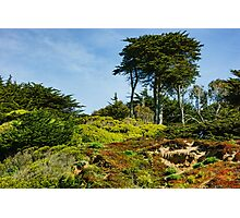 San Francisco Colorful Spring - Blooming Hillside with Pines Photographic Print