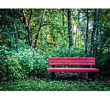 Lone bench Photographic Print