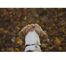 Autumn Hike with Ember Photographic Print