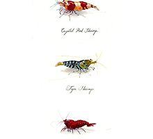 Three Shrimp by rah-bop