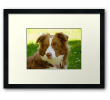 Agility & Intensity Are My Middle Names!! - Border Collie - NZ Framed Print