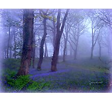 Rainy Morning at Blackbury Camp Photographic Print