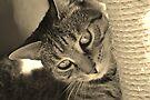 Cheeky kitty cat by Jemma Richards